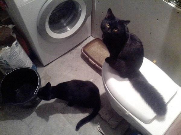 Проверка проделанной работы по ремонту ванной